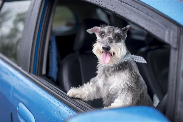 Uber vai permitir que viaje com o animal de estimação